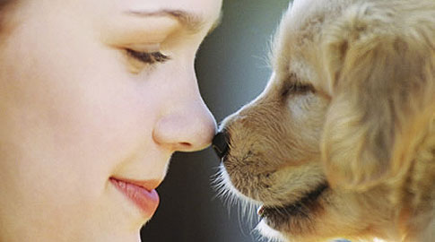 Animal Rescue – The Foundation's Animal Rescue and Welfare Efforts